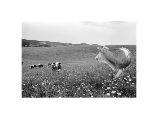 Rysula neboj to je fotak Lama