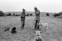 Pastieri
