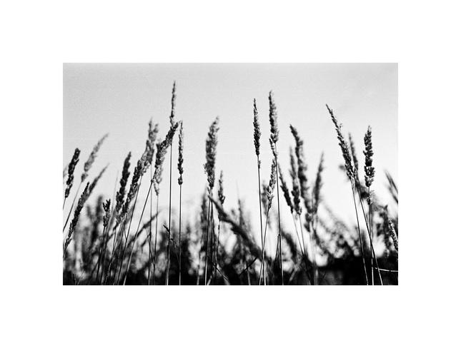 svetska slava - polna trava