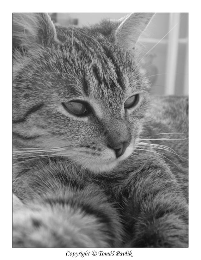 384e6f4c9 Mačacia siesta - Fotografia - Fotogaléria | ePhoto.sk - foto ...