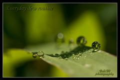 Everyday dew routine