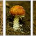Jedovatý triptych