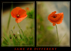 Same or different