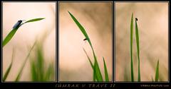 Súmrak v tráve II