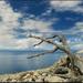 Starý strom na pobřeží