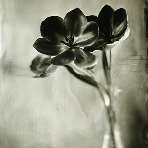 Wet Plate Collodion Day 2014#1