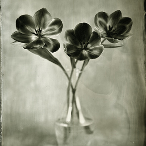 Wet Plate Collodion Day 2014#2