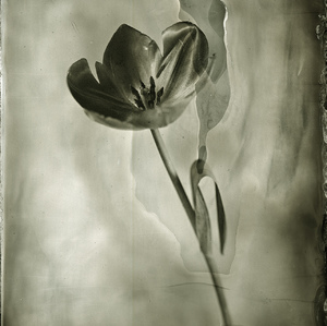 Wet Plate Collodion Day 2014#4