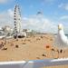 Brightonské leto