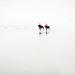 Plážový gallop II