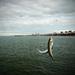 makrelová