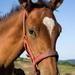 Kôň 1