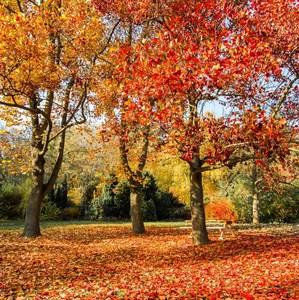 jesenný posed