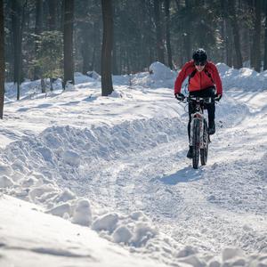 v zime v lese