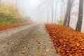 po modrej smer jeseň