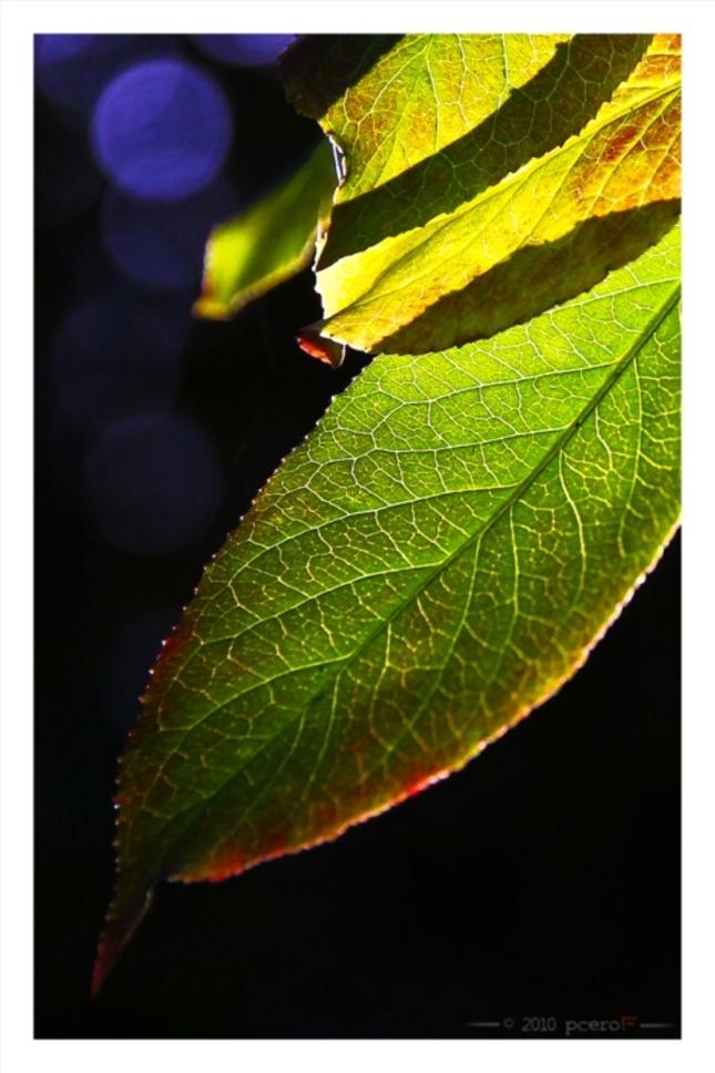 Zelená jeseň