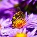 Usilovný ako včielka
