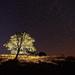 strom v sedle