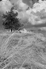 Až bude pokosená tráva
