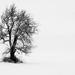 len strom