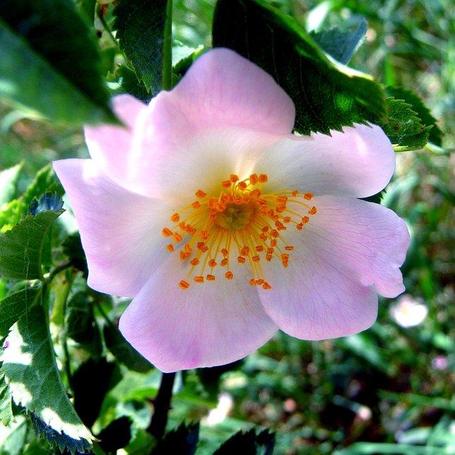 Kvetinka 300