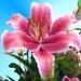 Kvetinka  117