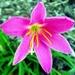 Kvetinka  94