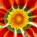 Kvetinka  50