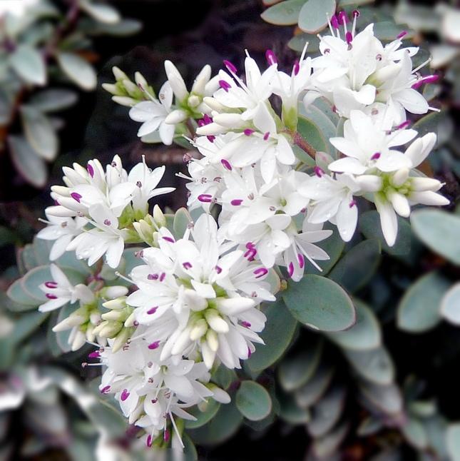 Kvetinka  123