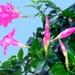 Kvetinka 29