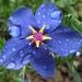 Kvetinka  130