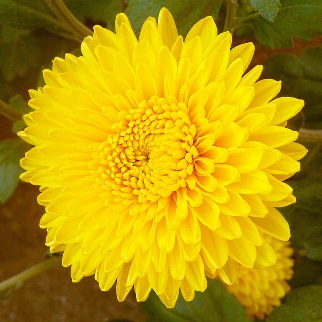 Kvetinka  106