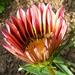 Kvetinka  78