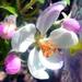 Kvetinka 25