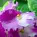 Kvetinka 18