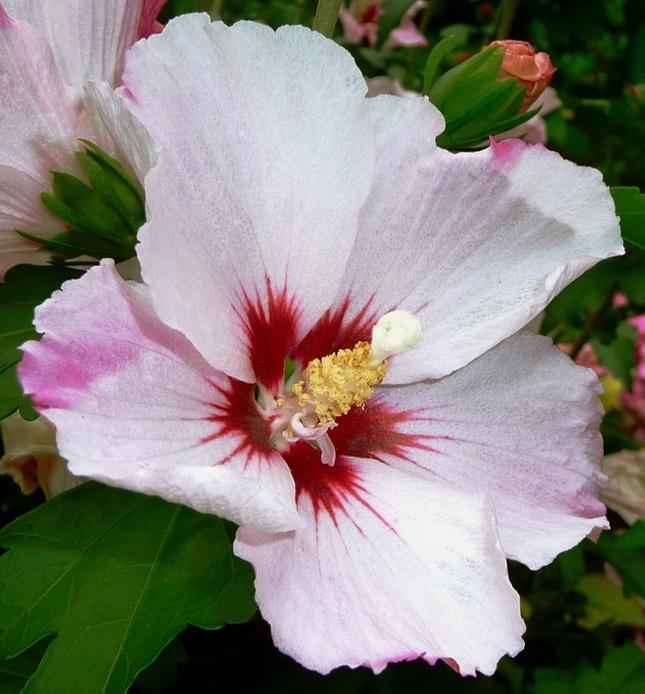 Kvetinka  53