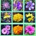 Kvetinka  100