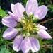 Kvetinka 58