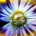 Kvetinka  101