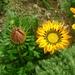 Kvetinka  115
