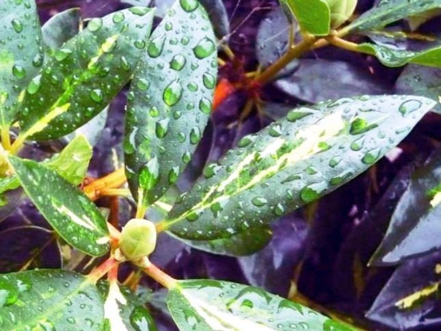 Kvapky po daždi 2