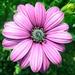 Kvetinka  99