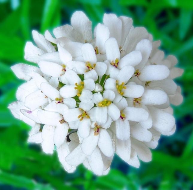 Kvetinka 26