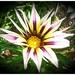 Kvetinka  82