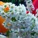 Kvetinka  147