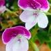 Kvetinka  56