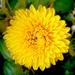Kvetinka  131