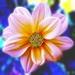 Kvetinka  140