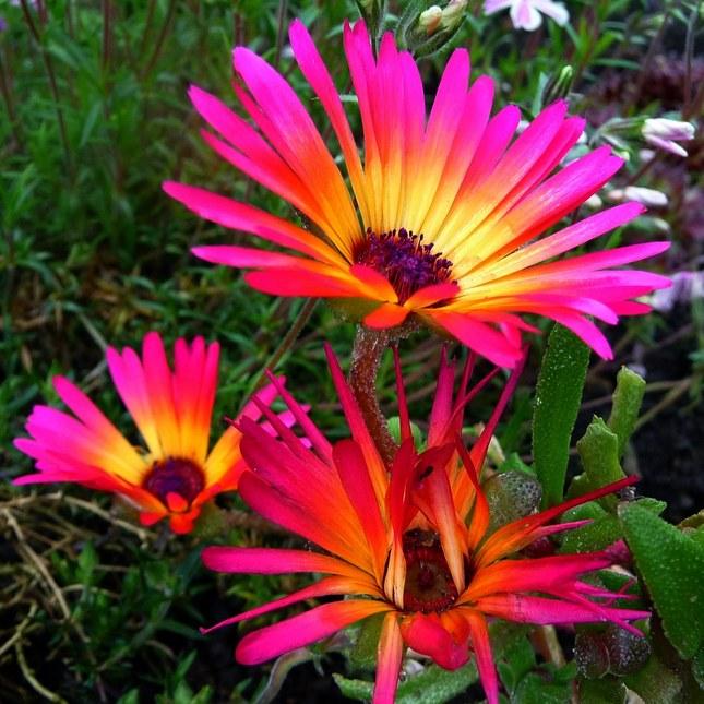 Kvetinka 175