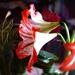 Kvetinka151